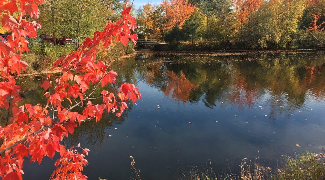 Lake view, Autumn
